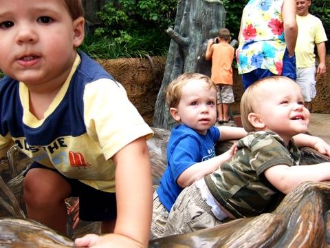 zoo-boys